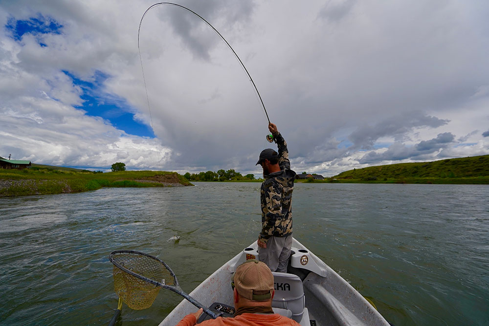 A Fly-Fisher landing a Brown Trout on Montana's Missouri River