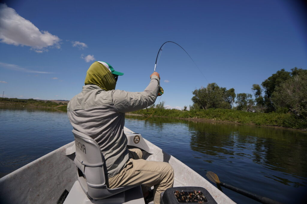 Montana Fly-Fishing for Brown Trout