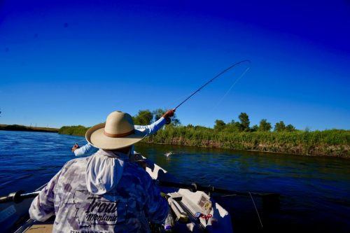 Fly-Fishing Montana's Missouri River
