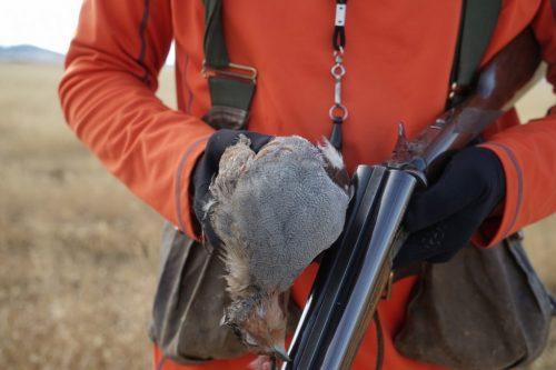 Montana Hungarian Partridge